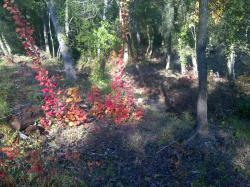 Autumnal Valmasque