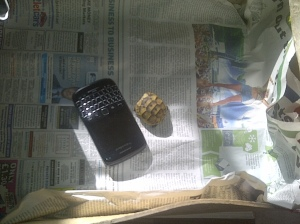 A baby tortoise, next to my blackberry to give it scale