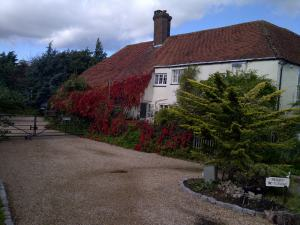 Virginia creeper turning red, a warning that autumn is in full effect and winter is around the corner.