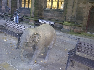elephant in chester