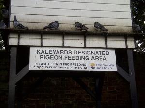 Kaleyards designated pigeon feeding area