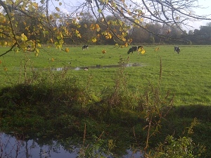 Sun, warmth and green fields in Arundel