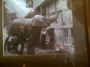 elephant makes trunk calll