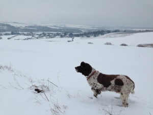 Snowy south Downs