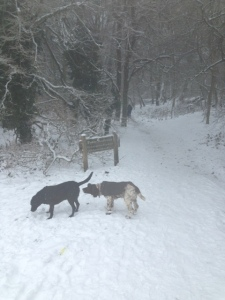 dogs sniffing in thr snow