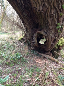 tree with hole