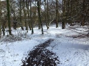 Snow in houghton Woods