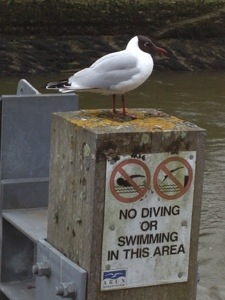 seagull takes the piss