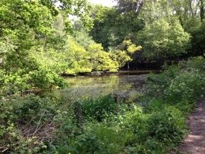 Woods in Sussex
