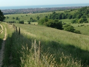 Sussex countryside