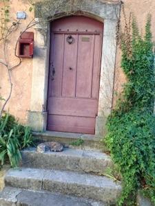 sleepy cat in Valbonne