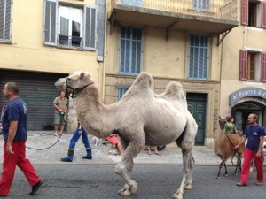 animals in Valbonne