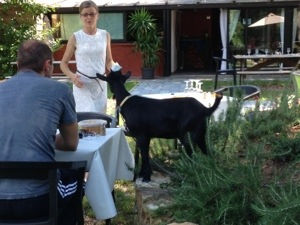 goat in restaurant