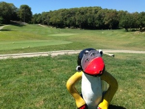 monkey on a golf course