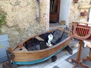 cat in a boat