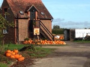 pumpkin alert