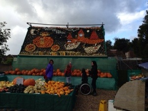 Gourds at Slindon