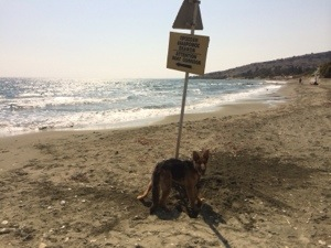 Doggy sandcastles